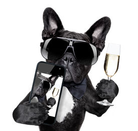 picture of french toast  - selfie of dog toasting for you in a cool pose - JPG