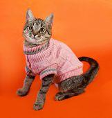 Striped Kitten In Pink Sweater Sitting On Orange