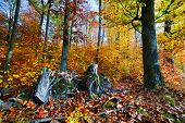 Natural forest in autumn, fall sunny day, colorful red yellow leaves