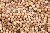 Background of the white pepper.