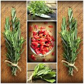 Collage of fresh herbs