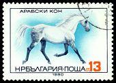 Vintage  Postage Stamp.  Arabian Horse.