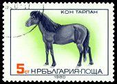 Vintage  Postage Stamp.  Tarpan Horse.