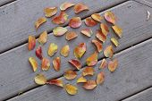 leaves of fall arranged in circle on deck