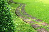 Walk Way On Green Grass