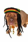 picture of rastaman  - Funny View on a Big Doggy in Rastafarian Hat - JPG