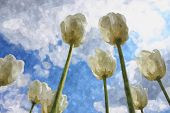 White Tulips On Cloudy Sky Background Watercolour Illustration