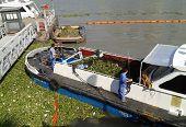 Clearing Huangpu River Shanghai China of Water Hyacinth