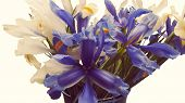 picture of day-lilies  - lilies bouquet - JPG