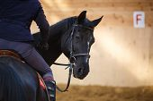 foto of horse-breeding  - A rider on the horse in training