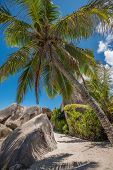 stock photo of granite  - Seychelles coconut palm tree and granite boulder La Digue island - JPG