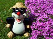 stock photo of mole  - Happy small mole in garden with flower - JPG