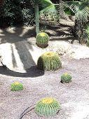 Cactus Japanese Park Alicante