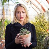 stock photo of greenhouse  - Portrait of florists woman working with flowers in a greenhouse holding a pot plant in her hand - JPG