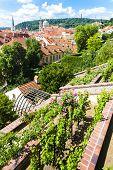 picture of nicholas  - Ledeburska Garden and Saint Nicholas Church - JPG