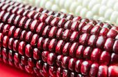 pic of corn cob close-up  - Photo cobs of corn lying on the table - JPG
