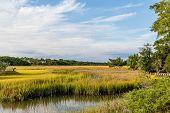 foto of marshes  - Brilliant Green Wetland Marsh Grass Growing Under Blue October Skies - JPG