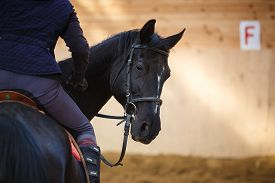 foto of chestnut horse  - A rider on the horse in training