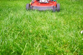 pic of grass-cutter  - Lawn mower cutting green grass in backyard - JPG