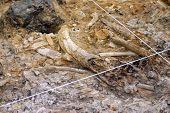 Fossil Park Digsite Bone