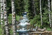 pic of brook trout  - Logan river head waters a peaceful babbling brook - JPG