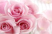stock photo of flower arrangement  - Petals and pink rose valentines - JPG