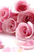 stock photo of pink roses  - Border of multiple pink roses - JPG