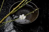 Spa Concept- white cherry blossom flowers in bowl