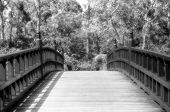 Bridge In Black And White