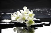 Still life with zen stones and white orchids with reflection
