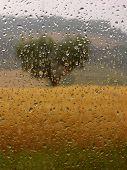 Rainy Summer Day