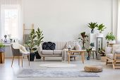 Urban Jungle In Bright Living Room Interior With White Couch With Knot Pillow And Wooden Furniture, poster