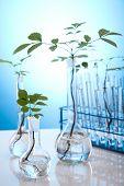 Plantas que crescem em tubos de ensaio em um laboratório de pesquisa