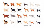 Set Of Dogs Of Different Breeds Isolated On White Background. Collection Of Purebred Pets, Domestic  poster