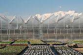 Nusery Greenhouses