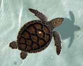 image of sea-turtles  - Young sea turtle in the blue pool on the bright day - JPG
