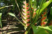 Costa Plant