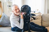 A Happy Senior Man Sitting On A Sofa Indoors With A Pet Dog At Home. poster