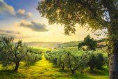 Maremma Countryside Panoramic View, Olive Trees, Rolling Hills And Green Fields On Sunset. Sea On Th poster