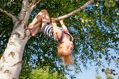 Low angle view of happy girl hanging  upside down from a birch tree looking at camera enjoying summe poster