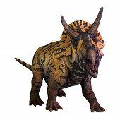 3D Rendering Dinosaur Triceratops  On White poster