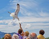 Soaring White Seagull, Close-up In Clear Sky On Summer Day. Seagull Flight. Feeding The Gulls From T poster