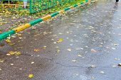 Falled Leaves On Wet Urban Road