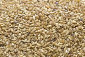 stock photo of flaxseeds  - many linseed or flaxseed seeds full frame - JPG