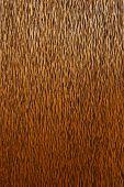 Palm Wood Grain