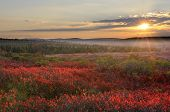 stock photo of virginia  - Sunset at Dolly Sods Wilderness in West Virginia with red blueberry bushes in foreground - JPG