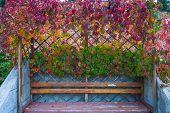 wild grape arbor