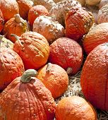 Pumpkins On Display In The Fall