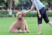 Mestre brincando com cachorro