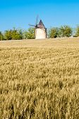 Barley And Wheat Field And Windmill